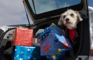 Dog in car christmas